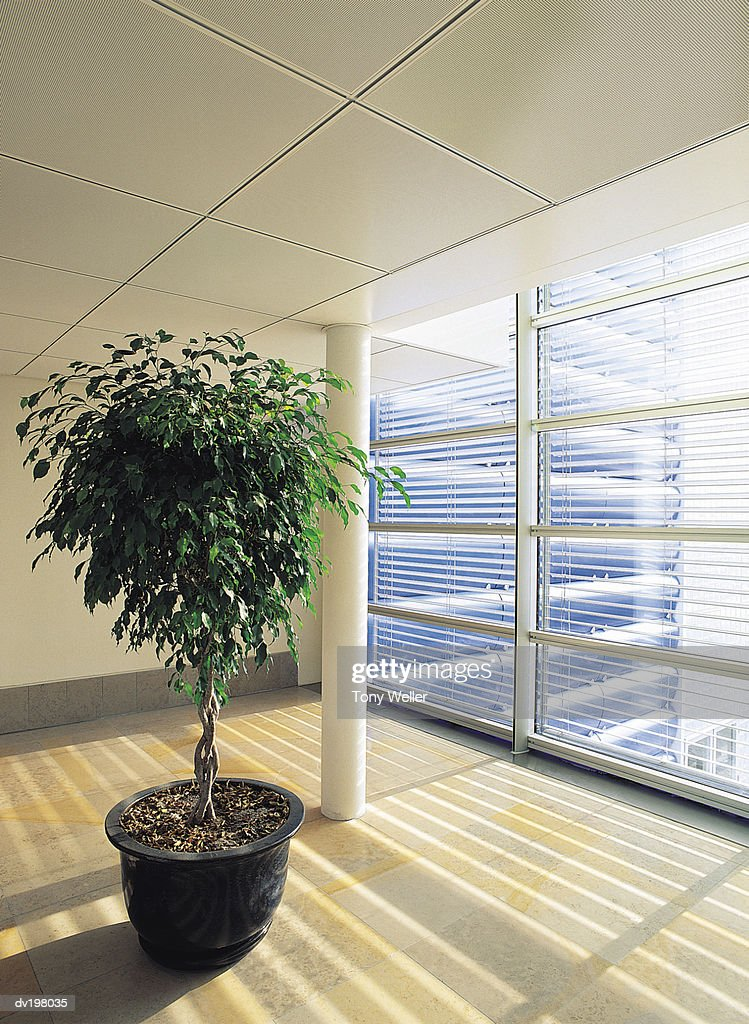 Potted plant sitting by window : Stock Photo