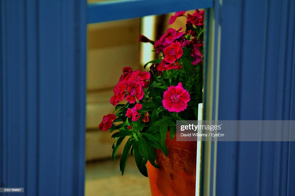 Potted Plant Viewed Through Window : Foto stock