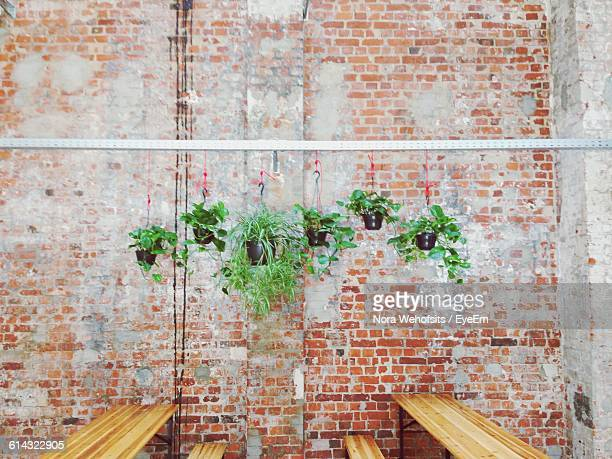potted plants against brick wall - hanging basket stock pictures, royalty-free photos & images