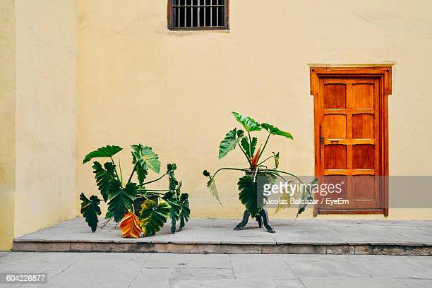 Potted Plants Against House