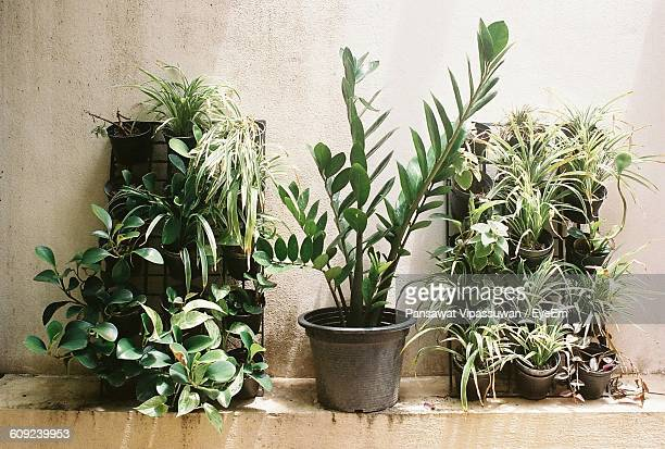 Potted Plants Against Wall