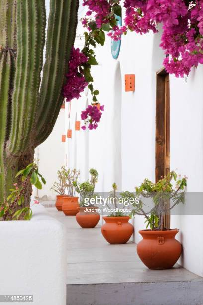 Potted plants along walkway
