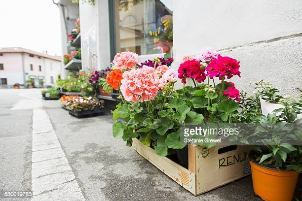 Potted plants and crates of flowers on tarmac kerb outside florist shop, Suno, Novara, Italy