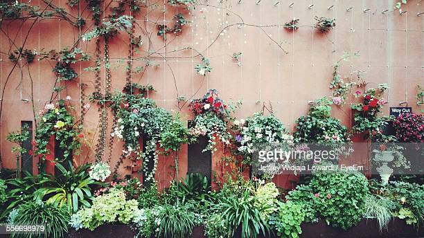 Potted Plants And Ivy Beside Wall