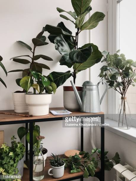 potted plants at home - houseplant stock pictures, royalty-free photos & images