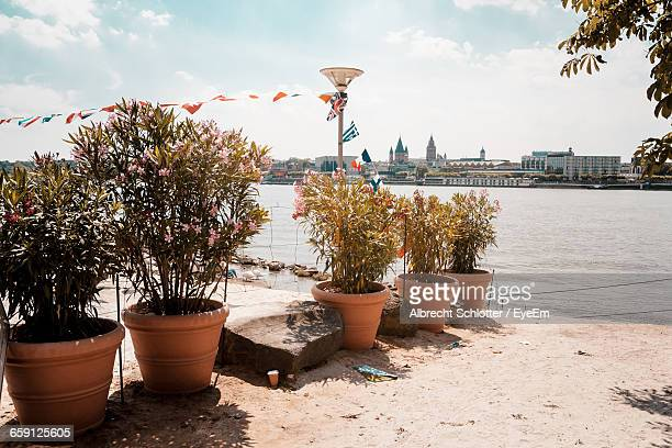 potted plants by river rhine - albrecht schlotter stock photos and pictures