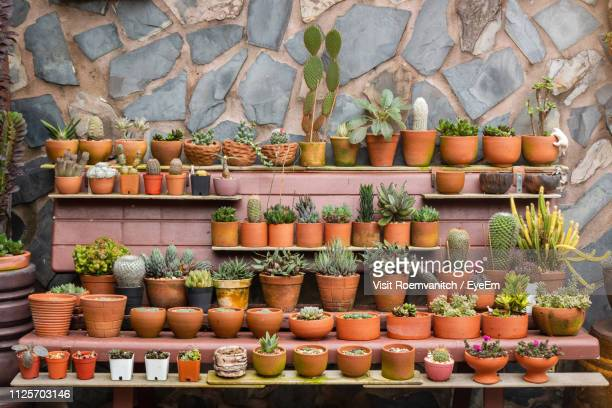 potted plants for sale against wall at market stall - sammlung stock-fotos und bilder