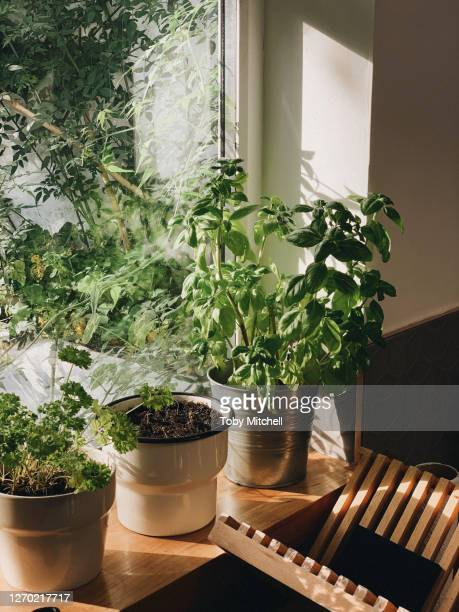 potted plants growing in sunny window - plant stock pictures, royalty-free photos & images