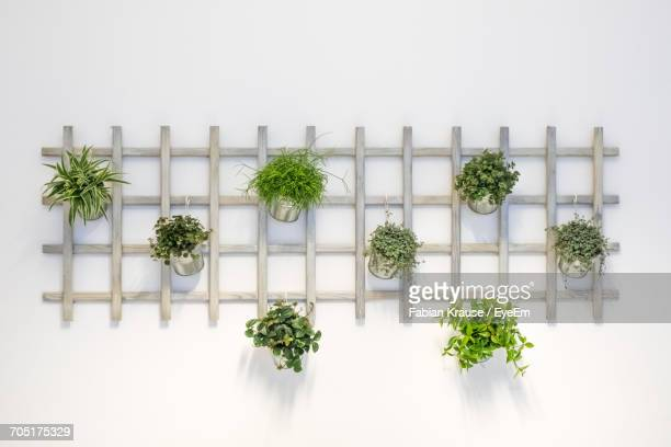 potted plants hanging from wooden rack against white background - draped stock pictures, royalty-free photos & images