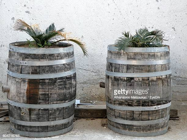 potted plants in barrel against wall - pot plant stock pictures, royalty-free photos & images