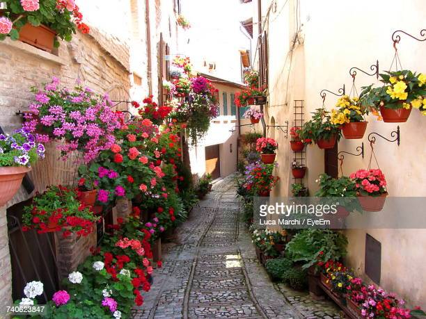 potted plants in city - umbria stock pictures, royalty-free photos & images