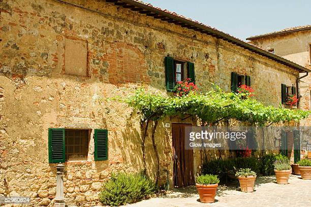 Potted plants in front of a building, Piazza Roma, Monteriggioni, Siena Province, Tuscany, Italy