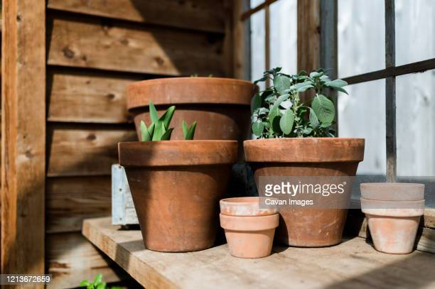 potted plants in greenhouse in waco texas - terracotta stock pictures, royalty-free photos & images