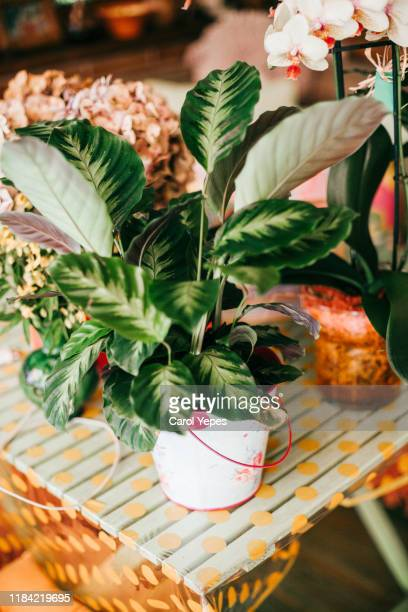 potted plants in greenhouse - chelsea flower show stock pictures, royalty-free photos & images