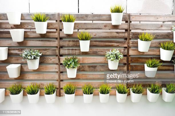 potted plants mounted on wooden wall - pot plant stock pictures, royalty-free photos & images