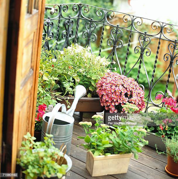 Potted plants on a balcony.