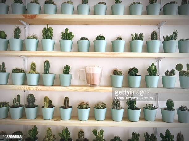 potted plants on shelves - essentials collection stock pictures, royalty-free photos & images