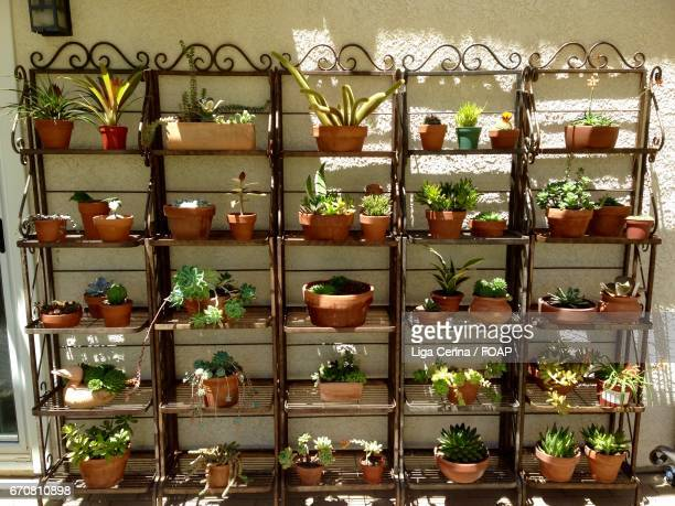 potted plants on shelves - liga cerina stock pictures, royalty-free photos & images