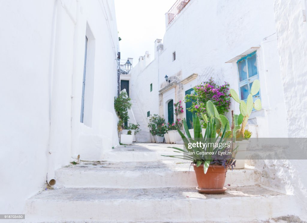 Potted Plants On Steps Amidst Buildings : Stock Photo