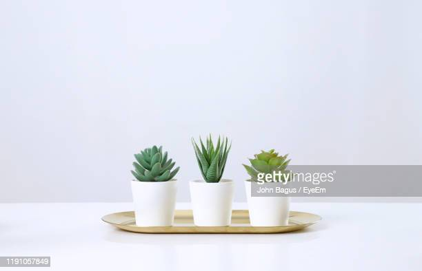 potted plants on table against white background - potted plant stock pictures, royalty-free photos & images