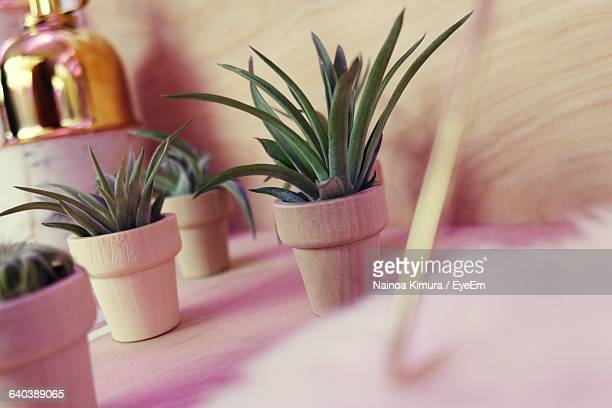 potted plants on table at home - at home ストックフォトと画像