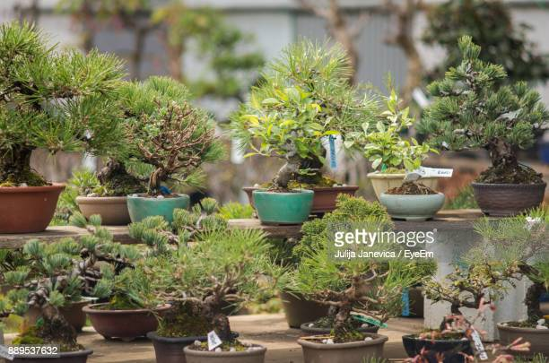 potted plants on table in greenhouse - bonsai tree stock pictures, royalty-free photos & images