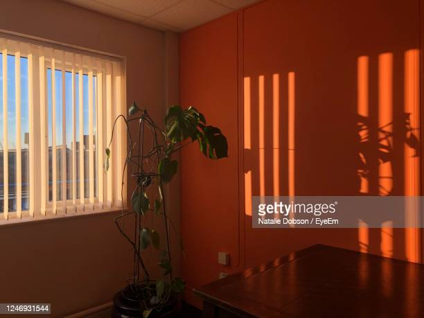 potted plants on table with light from the windows shadow on the wall - orange colour stock pictures, royalty-free photos & images