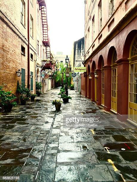 Potted Plants On Wet Street Amidst Buildings Against Sky