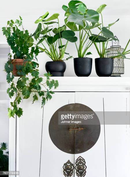 Potted plants on white cupboard