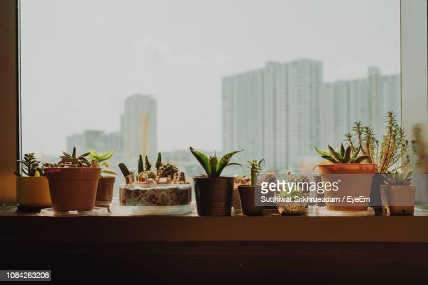 potted plants on window sill against sky in city - window sill stock pictures, royalty-free photos & images