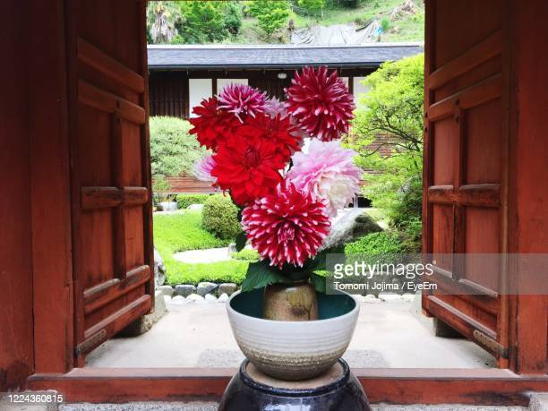 potted plants on window sill - asuka stock pictures, royalty-free photos & images