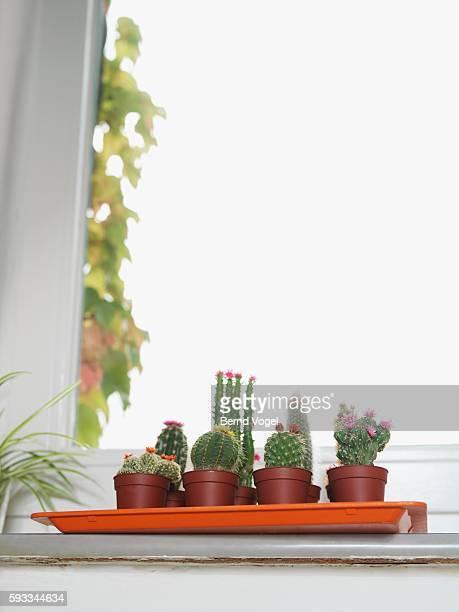 Potted plants on windowsill