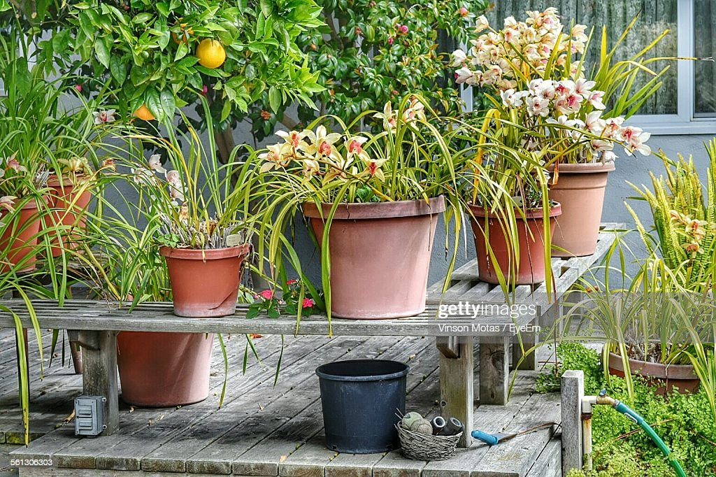 Fabulous Potted Plants On Wooden Bench Against Building Stock Photo Caraccident5 Cool Chair Designs And Ideas Caraccident5Info