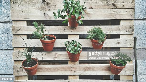 Potted Plants On Wooden Grate