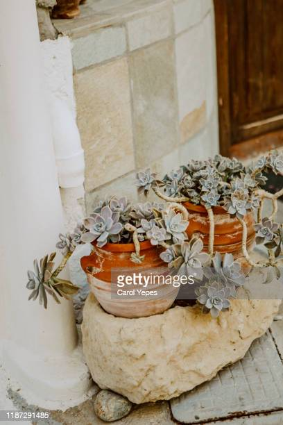 potted plants outdoors - chelsea flower show stock pictures, royalty-free photos & images