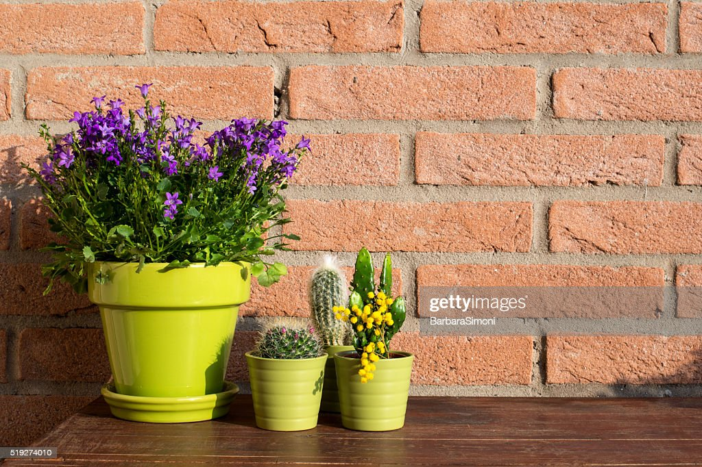Image result for Decorating Using Plants istock