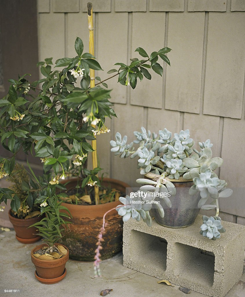 Potted plants : Stock Photo
