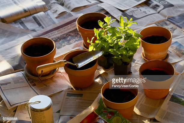 potted plants - climat stock pictures, royalty-free photos & images