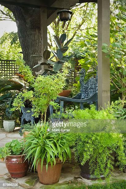 Potted plants under pergola
