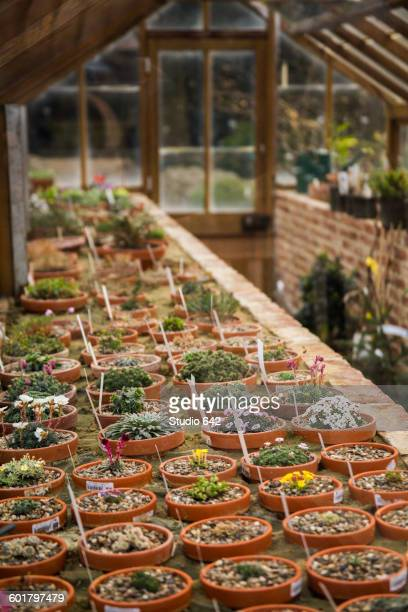potted seedlings growing in greenhouse - leuven stock pictures, royalty-free photos & images
