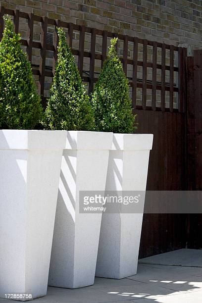 Potted shrubs in a row