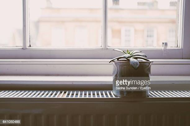 Potted Succulent Plant On Window Sill At Home