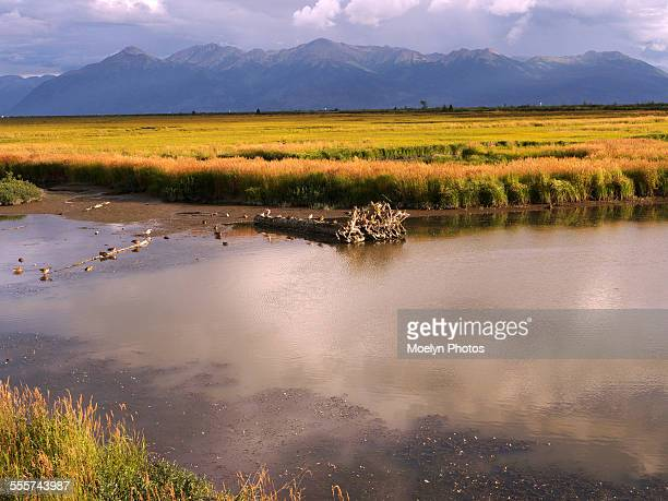 potter marsh and turnagain arms - wildlife reserve stock pictures, royalty-free photos & images