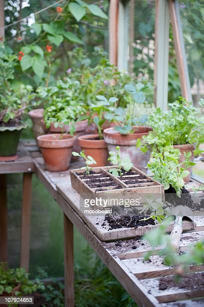 potting crate on workbench in greenhouse - streatham stock pictures, royalty-free photos & images