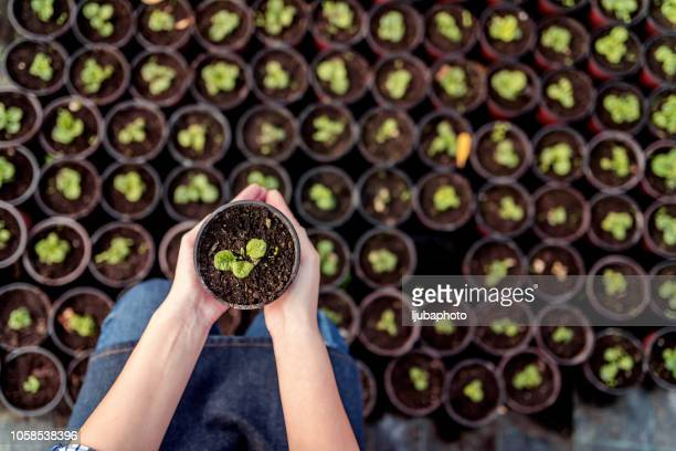 potting flowers - seedling stock pictures, royalty-free photos & images