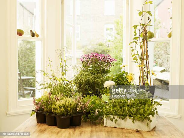 Potting plants on table in house
