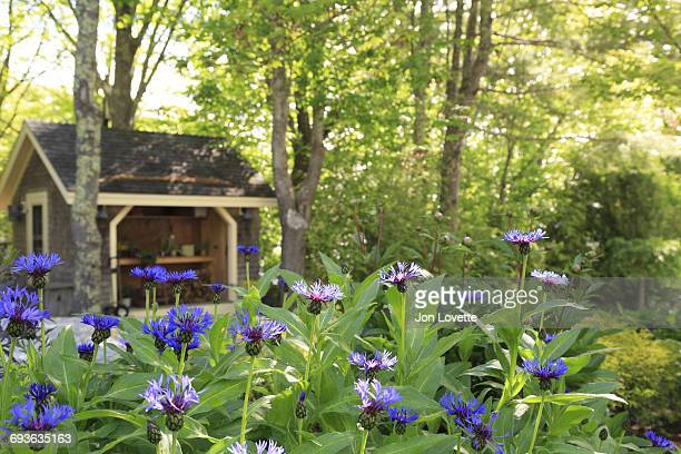 Potting shed in the garden with cornflowers