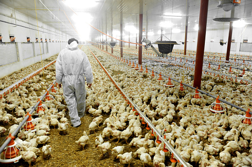 Poultry Farm And A Veterinary 482901353
