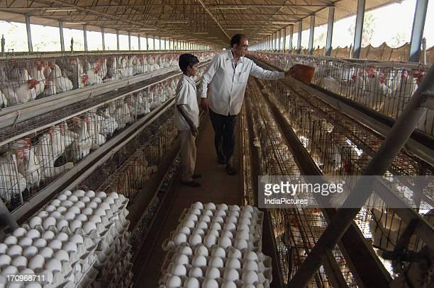 Poultry farm, Hyderabad, Andhra Pradesh, India.