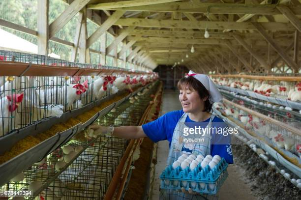 poultry farm - poultry stock photos and pictures